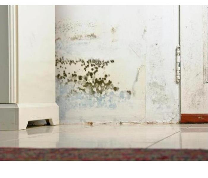 Mold Remediation 3 Common Types of Mold in Homes