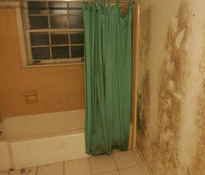 Mold Remediation You might have a mold problem if...