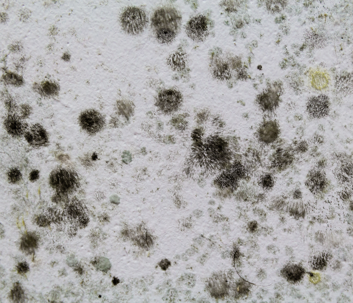 Mold Remediation Does Your Southeast Missouri Home Have A Mold Problem