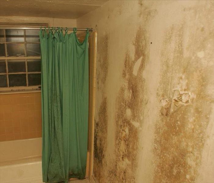 Mold Remediation What's that Musty Smell?
